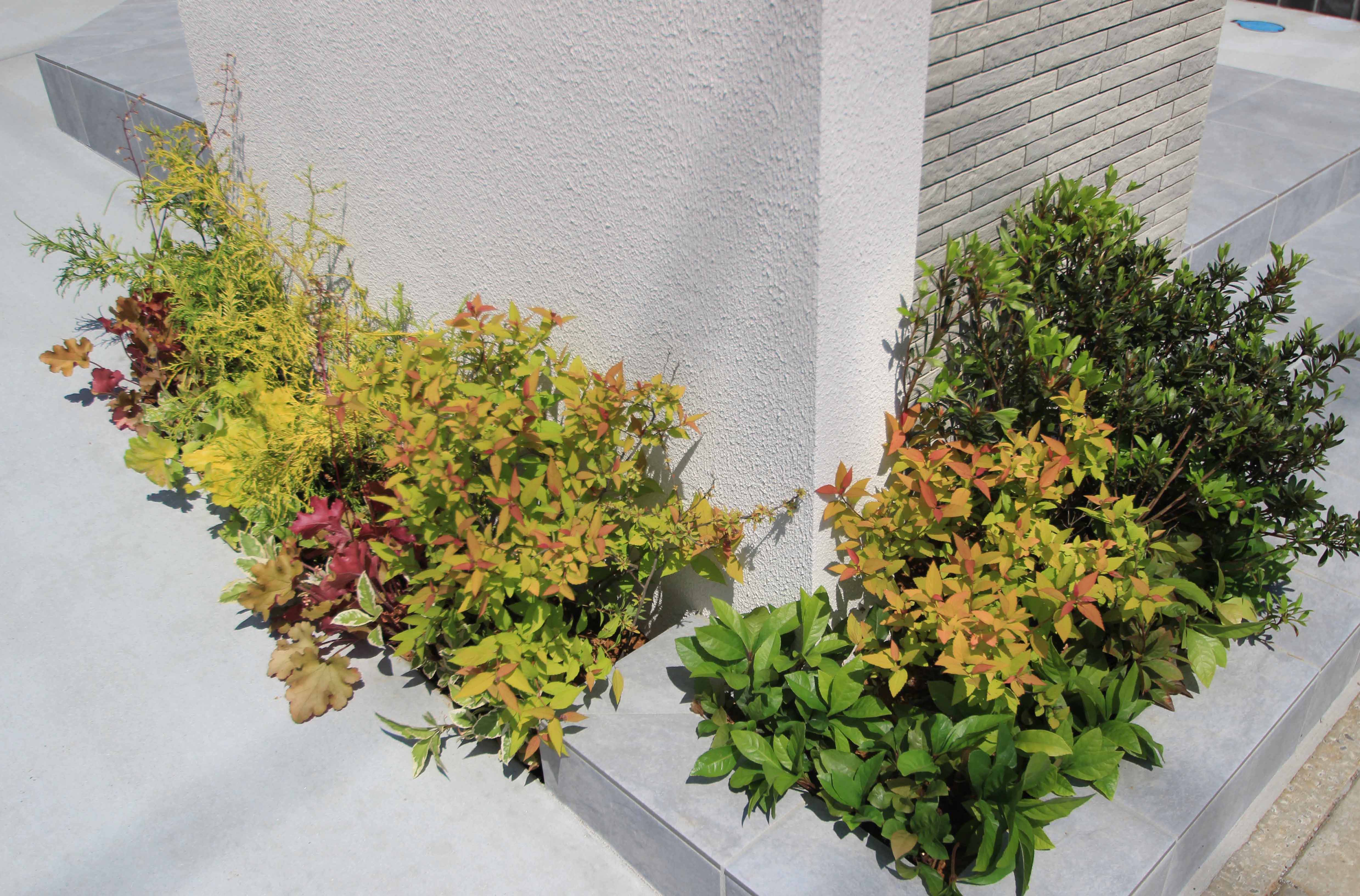 千葉市。<br>カッティングが美しい端正な白壁に香る初夏。11