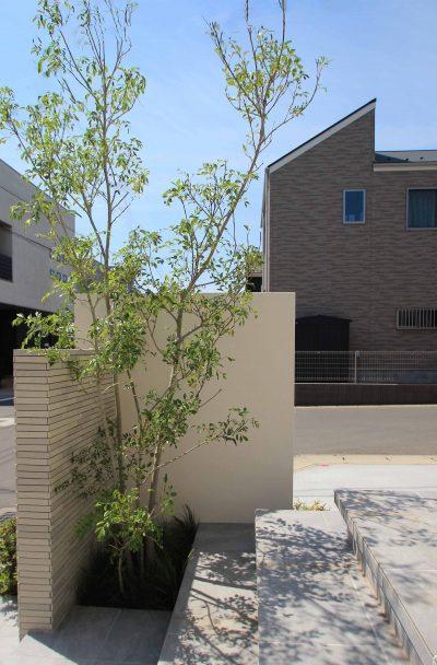 千葉市。<br>カッティングが美しい端正な白壁に香る初夏。10