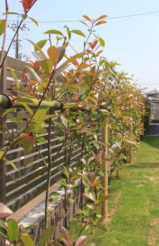 千葉市緑区にて。<br>すてきなカフェみたい。緑いっぱいのナチュラルガーデン。15