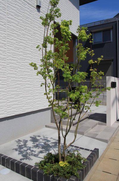 千葉市。<br>カッティングが美しい端正な白壁に香る初夏。15
